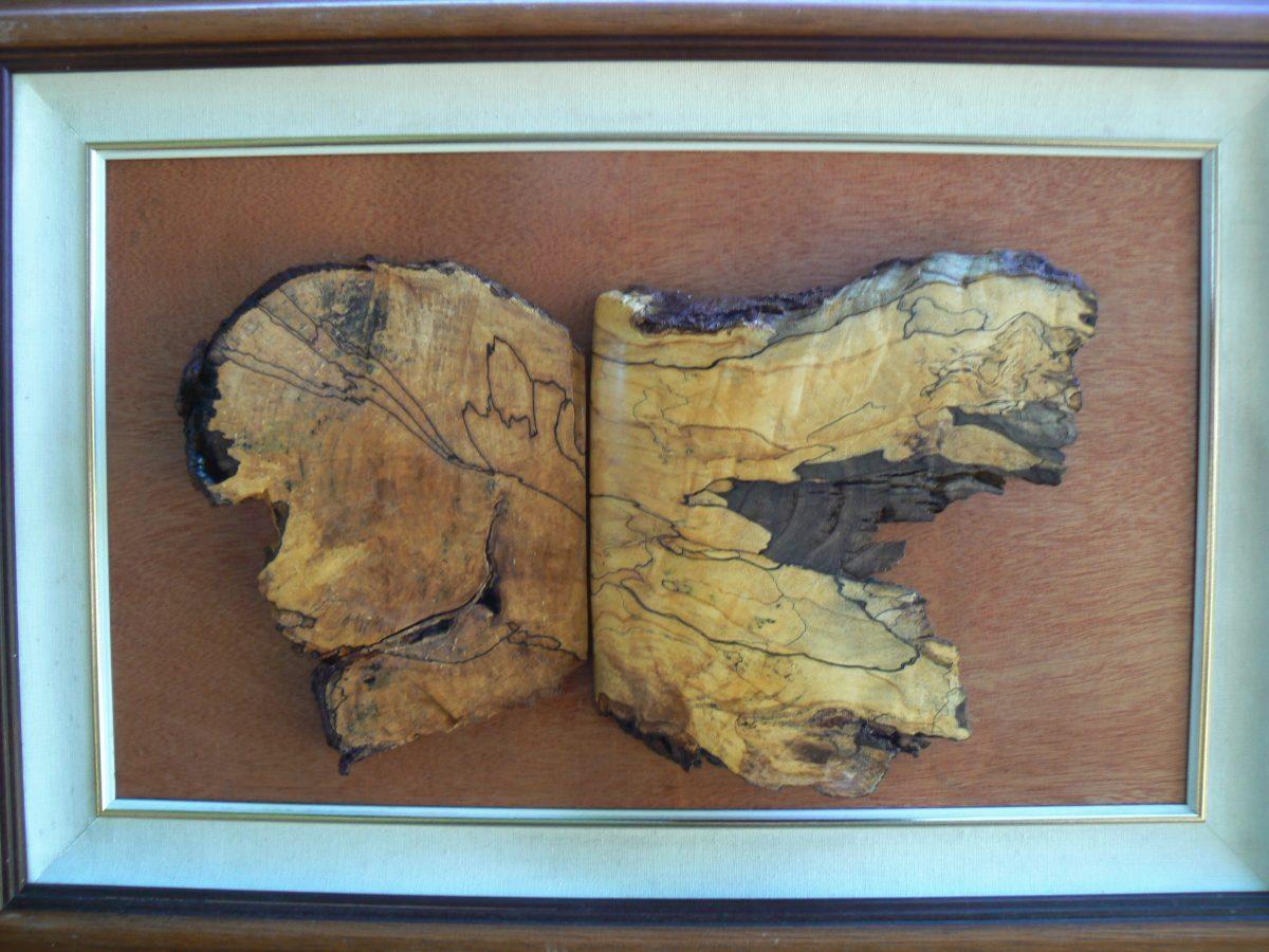 Puppy Butterfly, spaulding maple, mahogany, framed