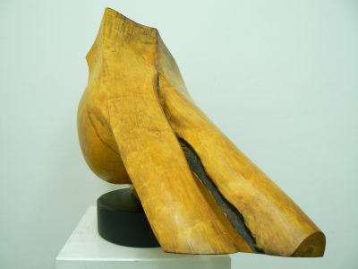 Dinosaur Tooth, carved holly wood